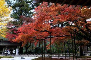 【福岡・糸島】雷山千如寺大悲王院の紅葉