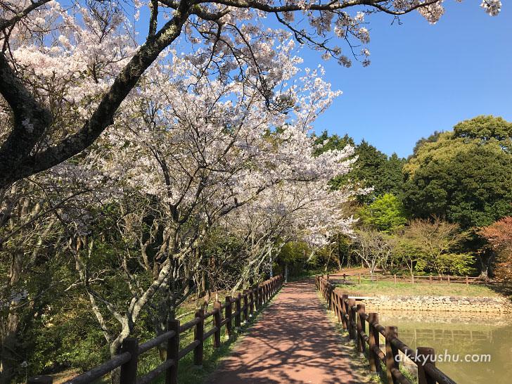 写真:唐津 鏡山展望台への道