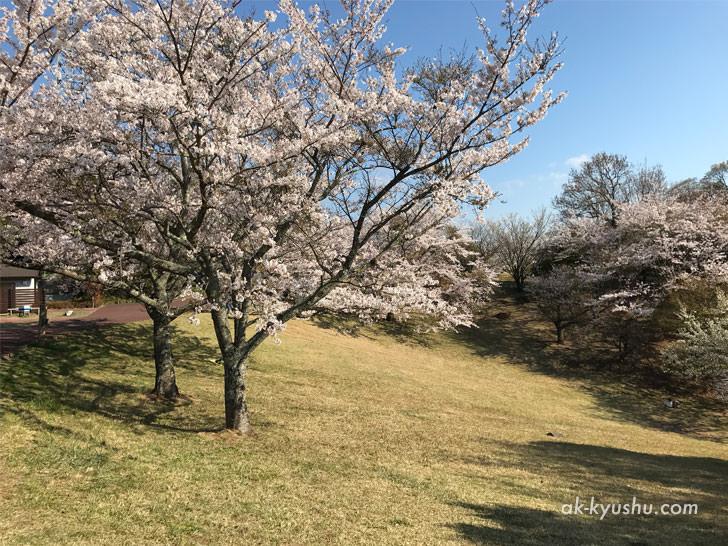 写真:唐津 鏡山公園