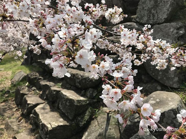 写真:唐津 名護屋城跡 石段
